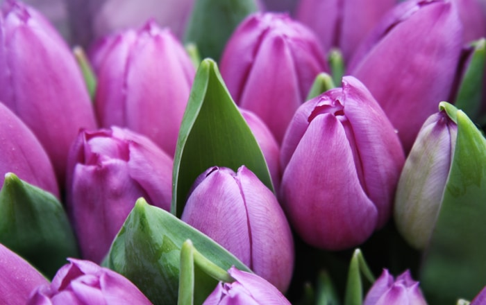 Business Blooming For IPP And Flower Wholesaler.